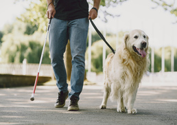 guide-dog-helping-blind-man-city-handsome-blind-guy-have-rest-with-golden-retriever-city.jpg
